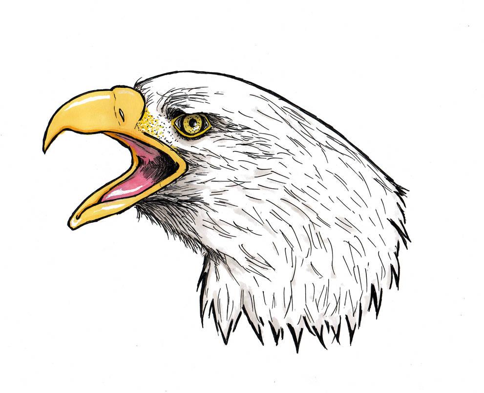 Eagle color