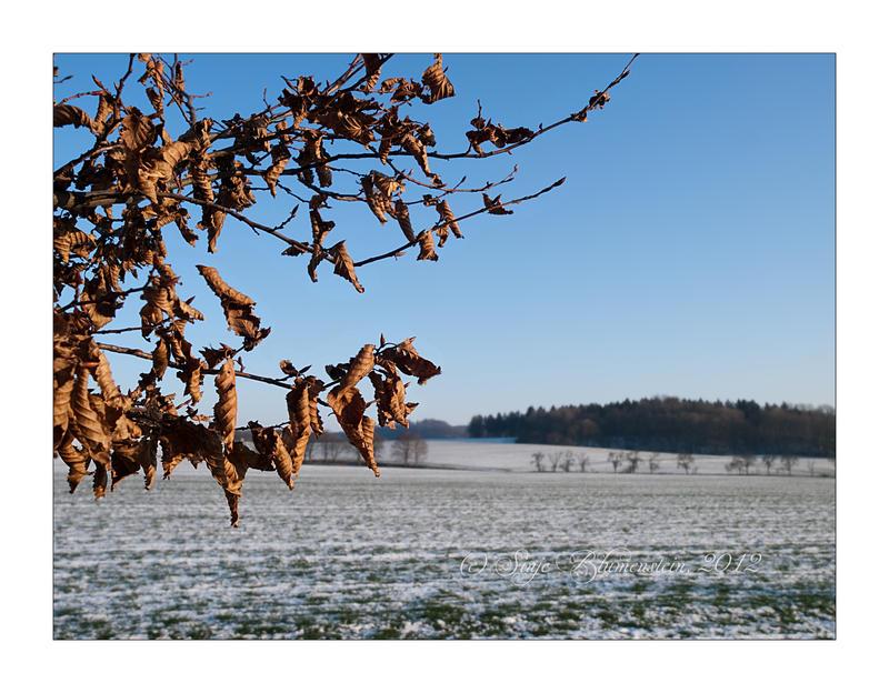 A taste of winter by Vampirbiene