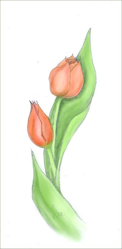 Tulip coloured by Vampirbiene