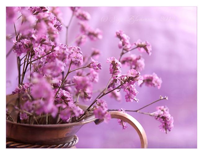 Just pink by Vampirbiene
