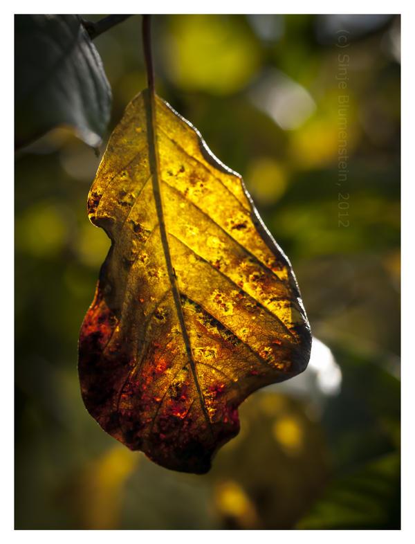 Season colours by Vampirbiene