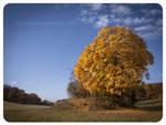 Autumn land by Vampirbiene