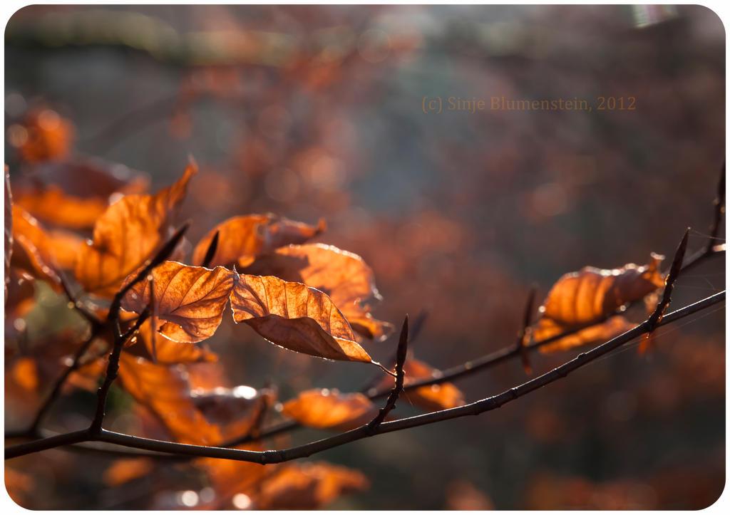 November day by Vampirbiene