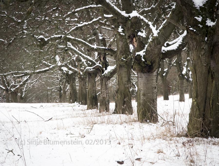Winter plantation by Vampirbiene