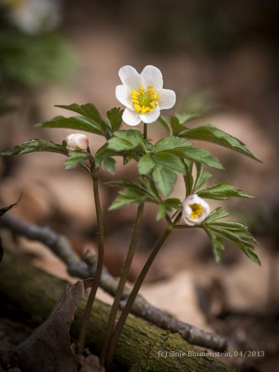 Fresh Spring by Vampirbiene