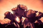 Bunch of Daffodils by emilymh2018