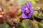 Blooming Violet Flower II by emilymh2018