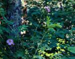 Blooming Pink Wildflowers by emilymh2018