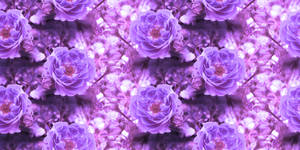 Lavender Rose Tile