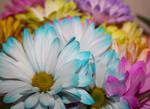 Flowering Pastel Blue Spring Daisy by emilymh2018