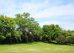 Green Trees in Park with Blue Sky