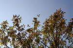 Brown September Leaves