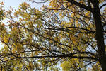 Tree Branches and Autumn Leaves