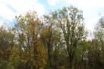 Trees in Late September Outside