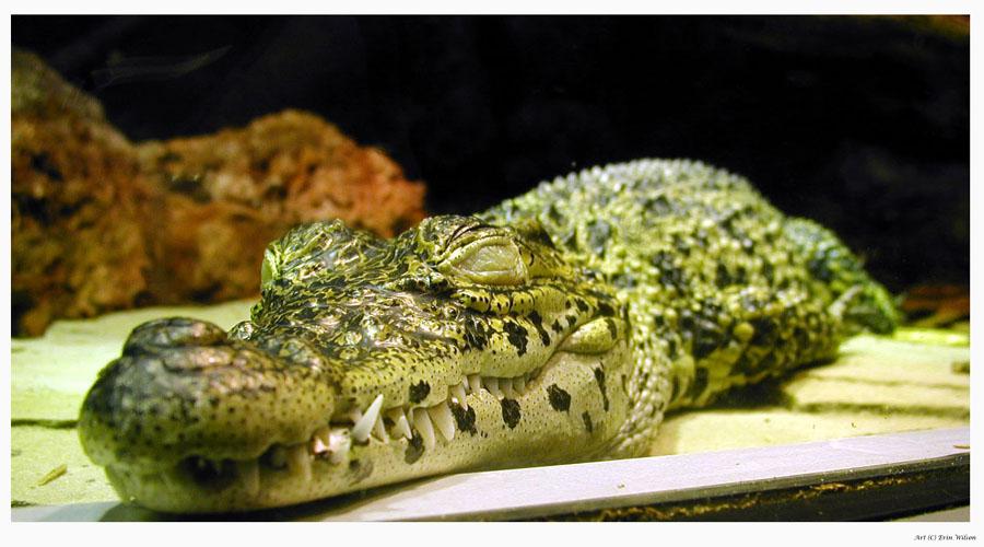 The Little Crocodile by TheCrochetDragon on DeviantArt