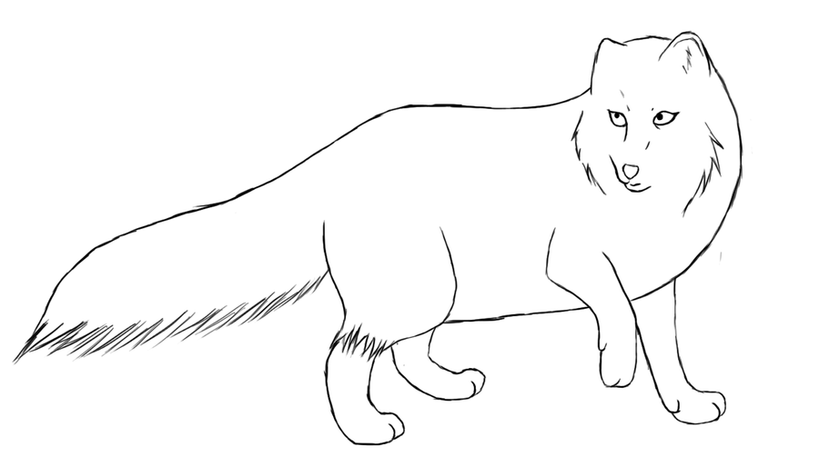 Line Drawing Fox : Arctic fox drawing