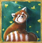 Little Red Panda