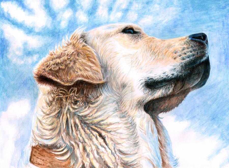 Golden Retriever by ArtsandDogs