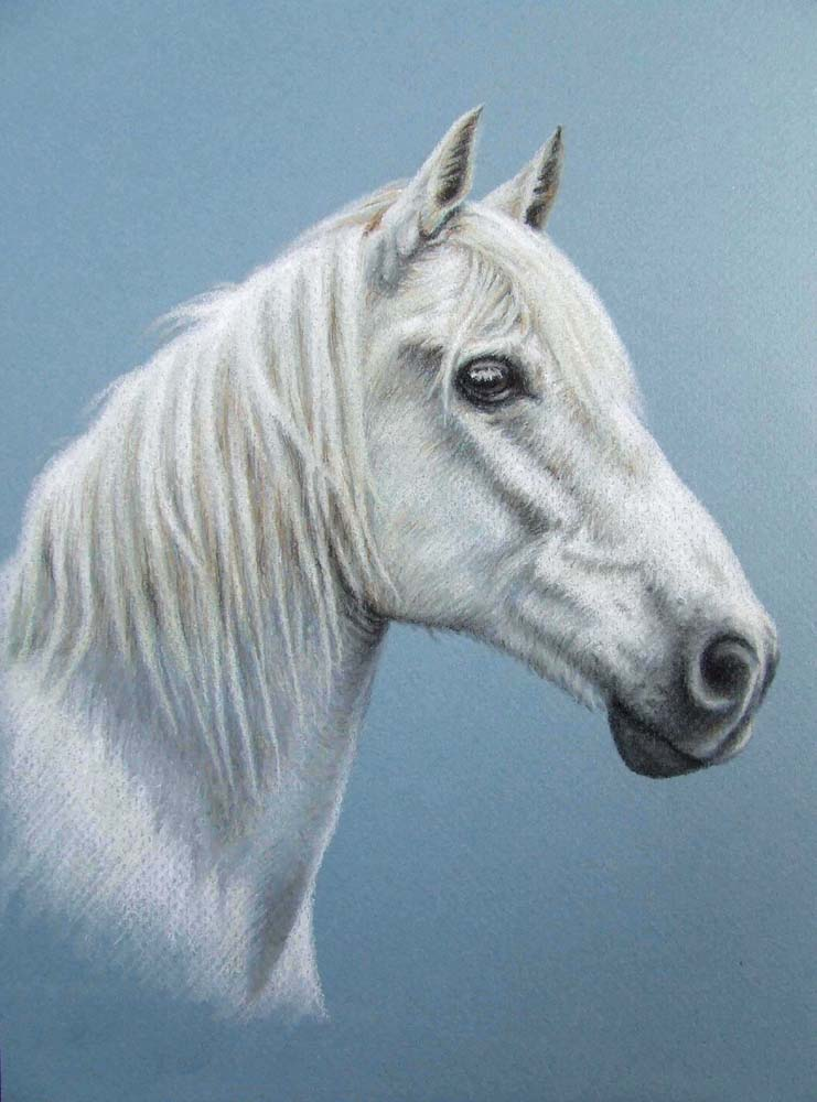 White Stallion by ArtsandDogs