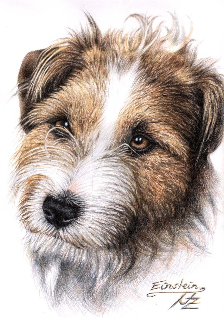 Jack Russell Terrier Einstein by ArtsandDogs