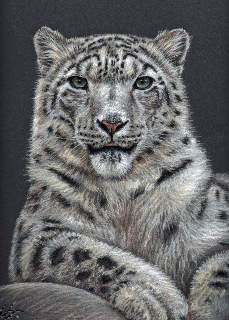 Snow Leopard by ArtsandDogs