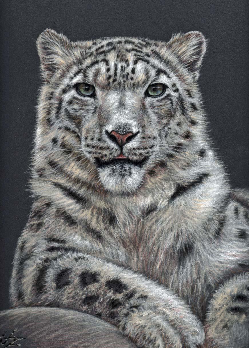 Snow Leopard by ArtsandDogs