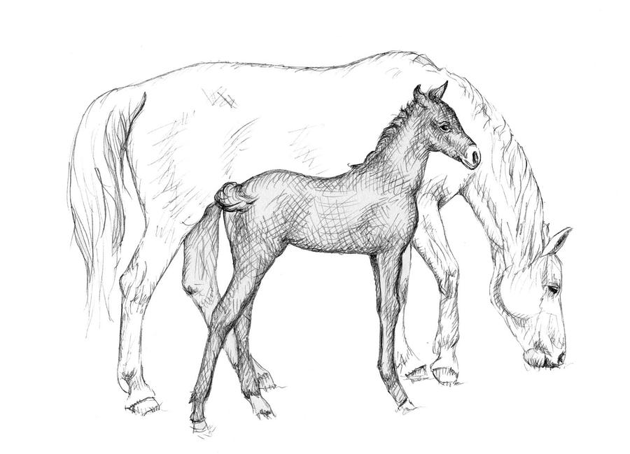 Horse Pictures Black And White Drawing Drawing Pictures of Horses