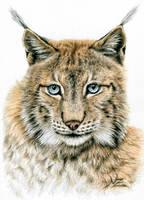 The Lynx by ArtsandDogs