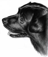 Black Labrador by ArtsandDogs