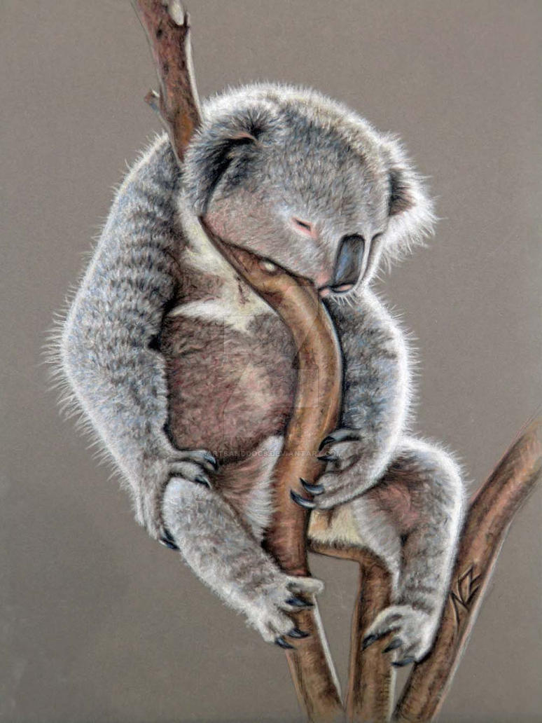 Koala Sleep by ArtsandDogs