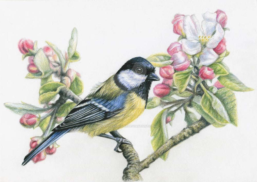 Great Tit in Spring by ArtsandDogs
