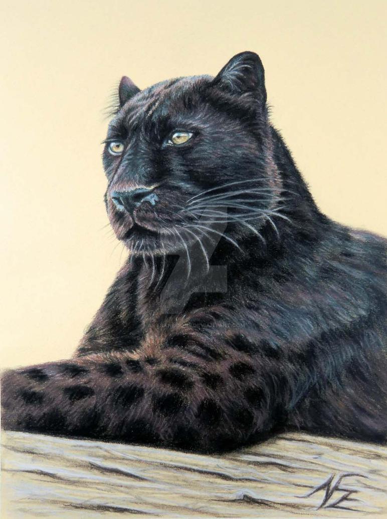 Panther Jaguar by ArtsandDogs