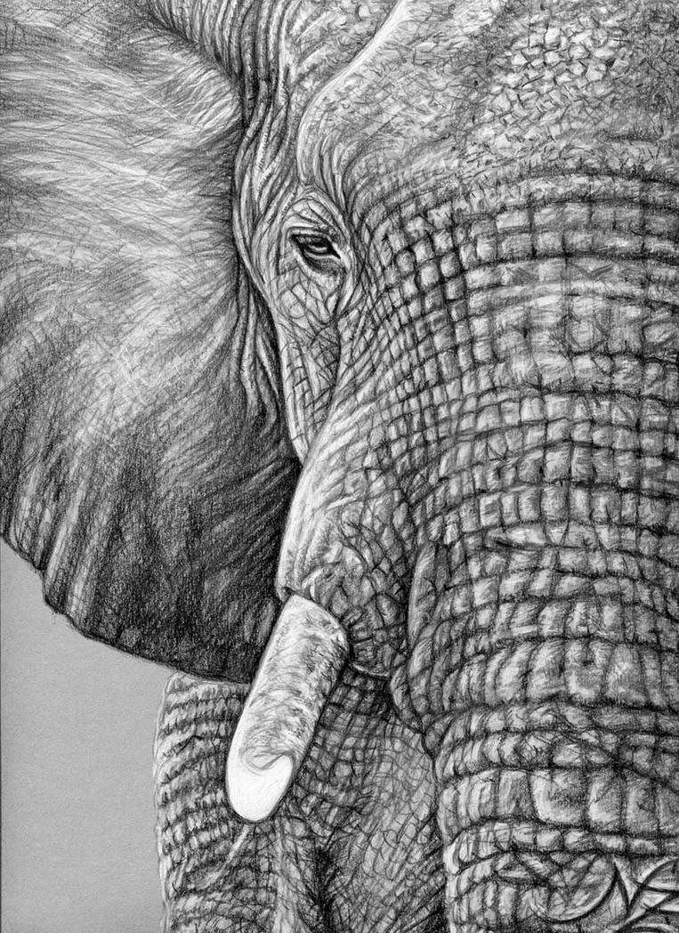 African Elephant - Afrikanischer Elefant by ArtsandDogs