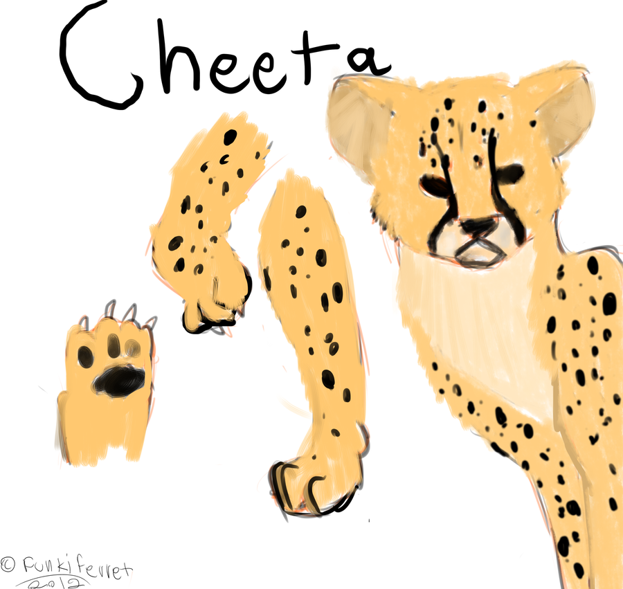 Cheetah studie by FUNKIferret