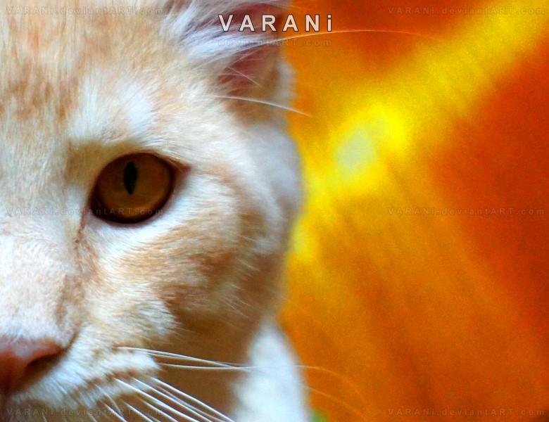 - - - l e o n - - - by Varani