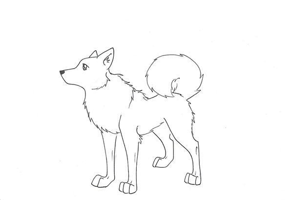 Husky Dog Drawing Husky Dog Line Drawing Husky