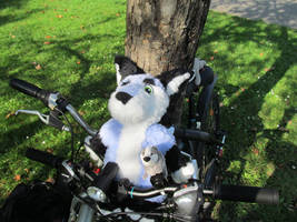 Zuzu and JazzBadger on the road - bicicle ride