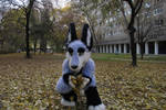 Zuzu the KangarooWolf with autumn leaves