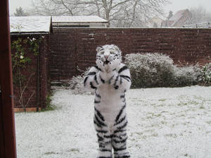 Felix Stripes has his first snow