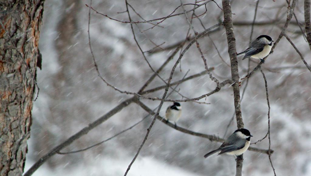 triangulation by tiny-sparrow