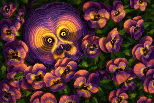 Pansy Owl