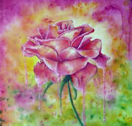 Fragility by Ann Marie Bone