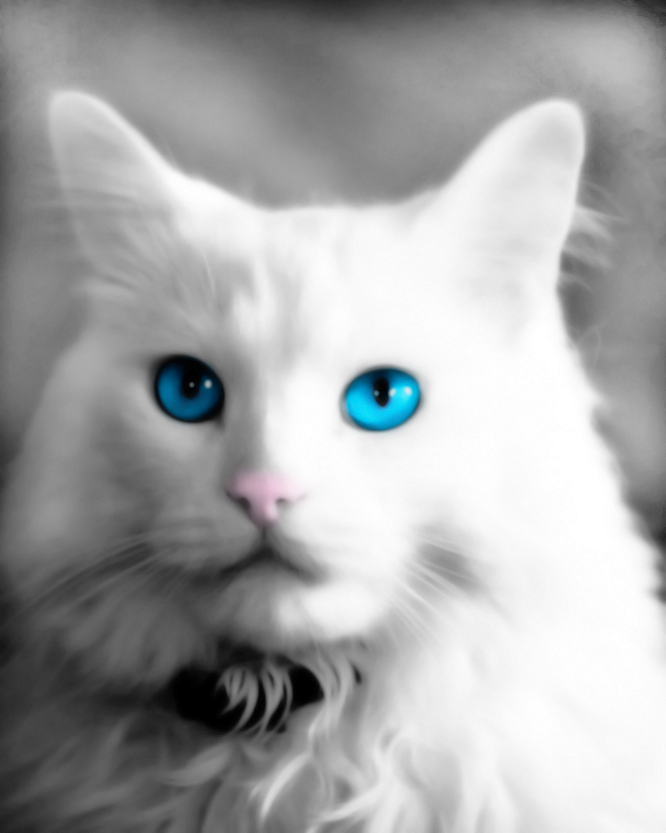 Weiss Katze by nkear5