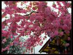 Flowers of Nikko