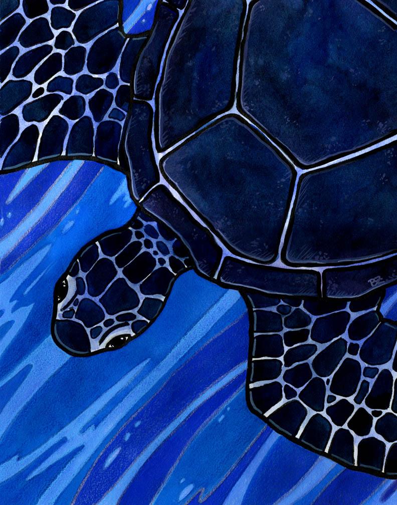 Black Turtle of the North by SpaceTurtleStudios