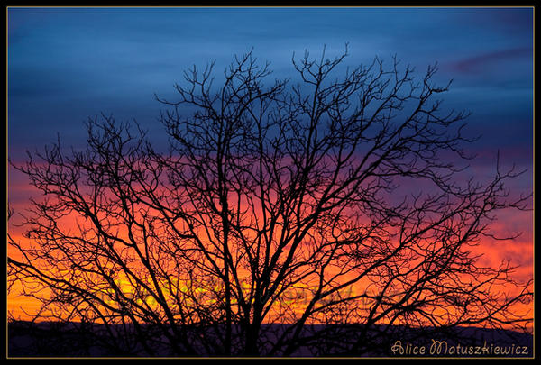 Sunrise Tree by allym007