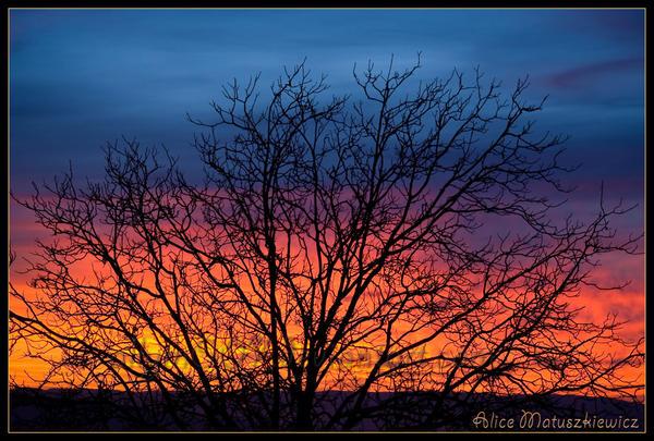 Sunrise Tree by allym007