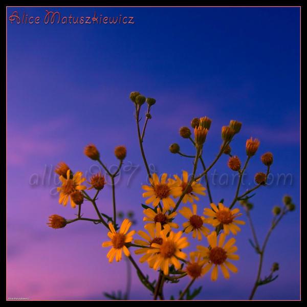Sunset Little Suns by allym007