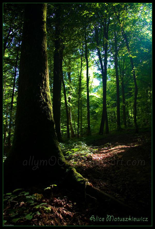 Go Towards the Light by allym007
