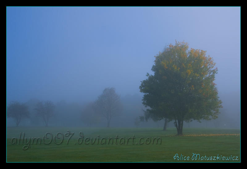 Foggy Tree by allym007